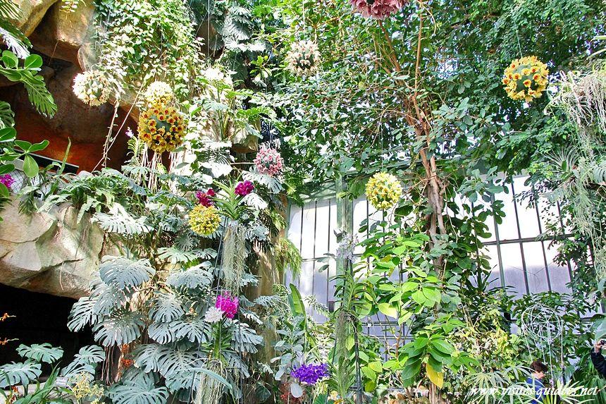Mille et une orchidées Jardin des Plantes Paris – Paris Autrement