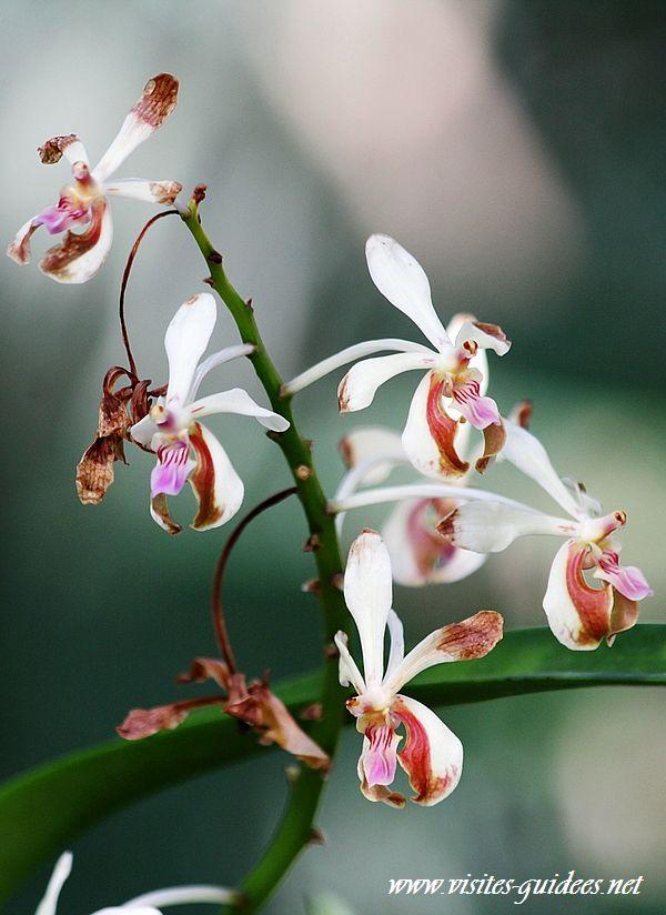 Mille et une orchidée