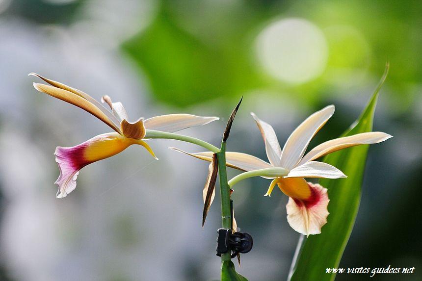 Mille et une orchidées