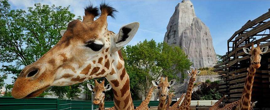 Adeline parc zoologique de Paris