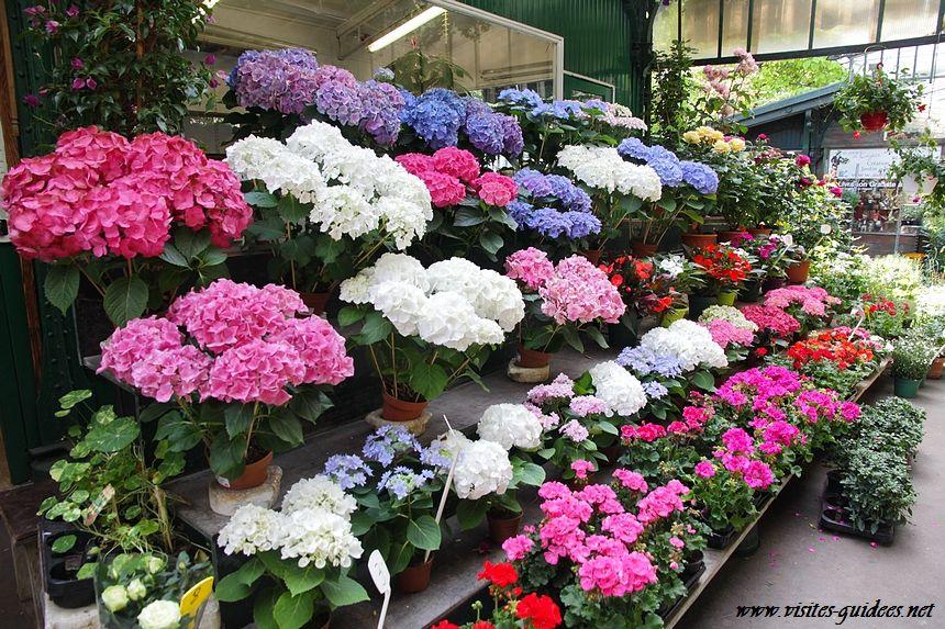 Marché aux Fleurs Reine Elisabeth II