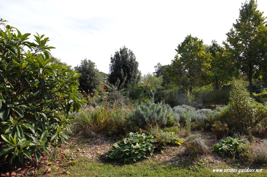 Parc de l'Ile Saint Germain le jardin des lavandes