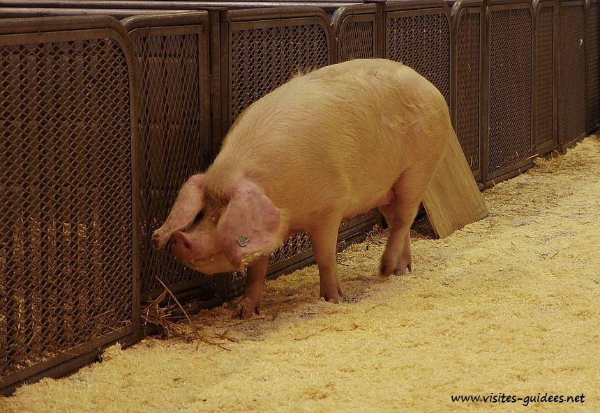 Salon del'Agriculture 2015 Porc Blanc de l'Ouest