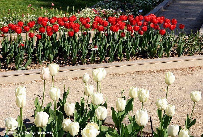 Parc floral de Paris tulipes