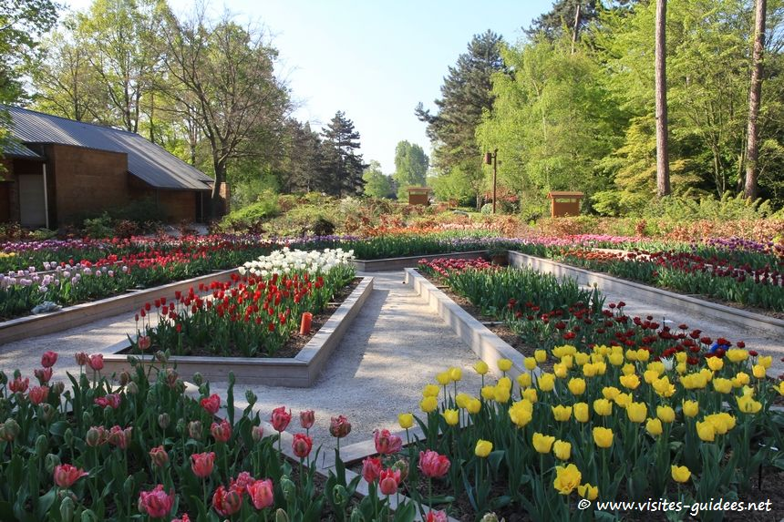 Parc Floral de Paris tulipes
