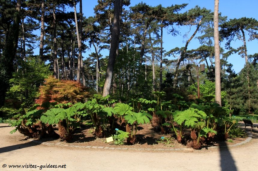 Parc floral de Paris Gunnera