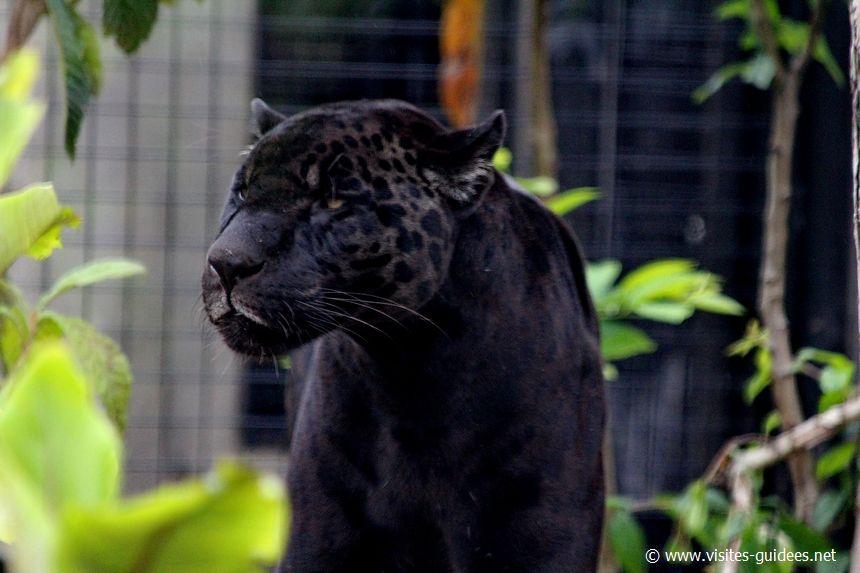 Aramis Parc Zoologique de Paris