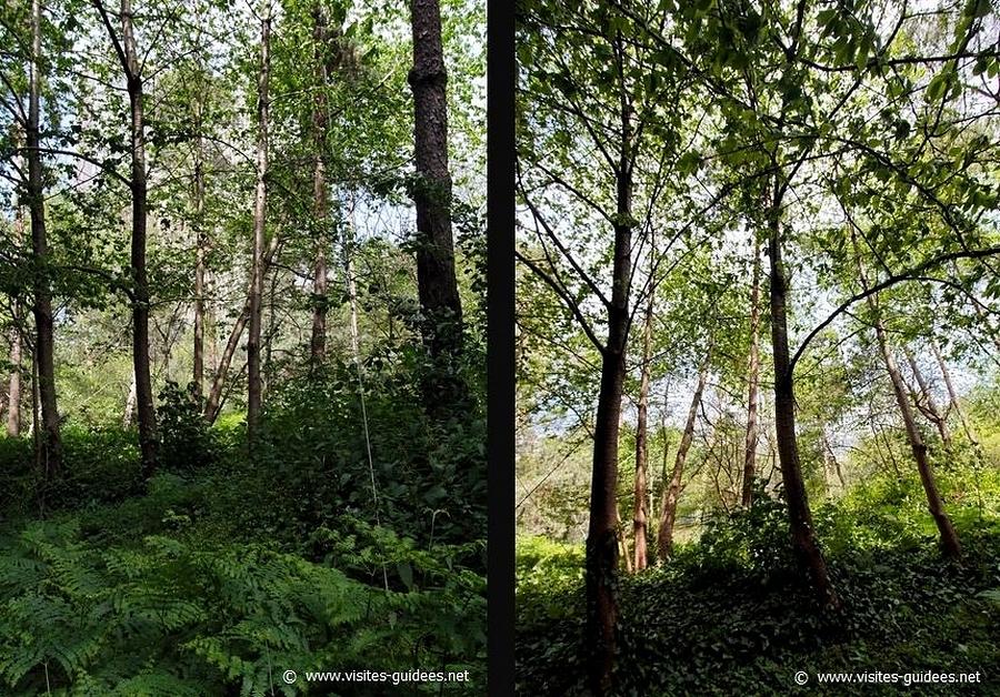 Jardin-forêt de la BnF