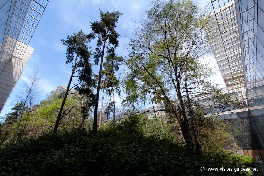 Le jardin-forêt de la BnF