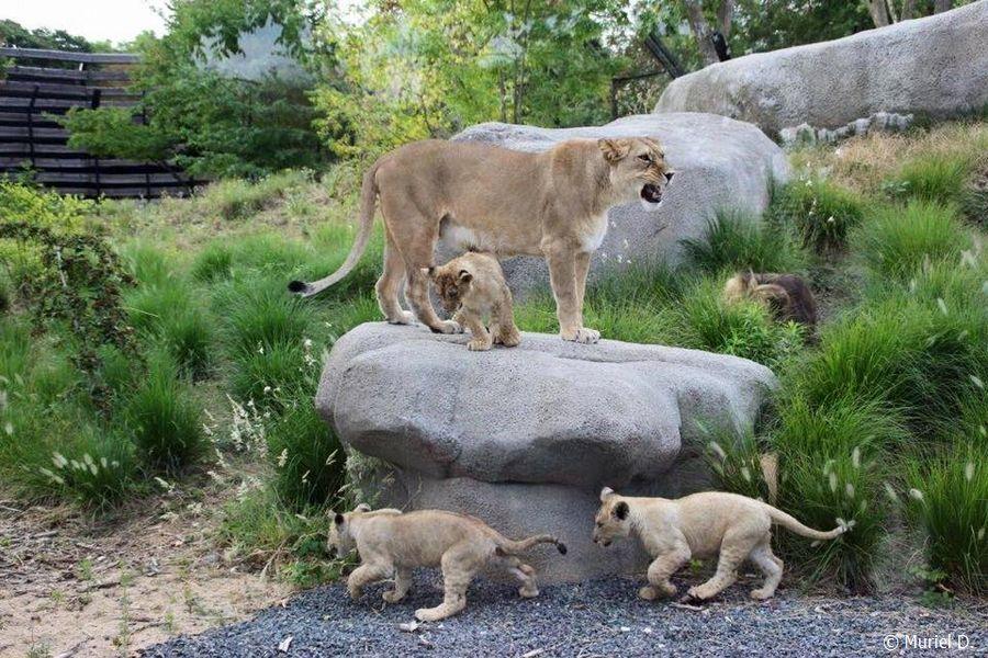 Néro et sa famille PZP