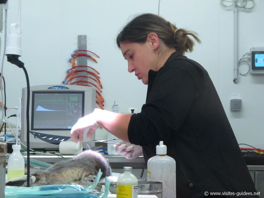 Clinique vétérinaire Parc Zoologique de Paris