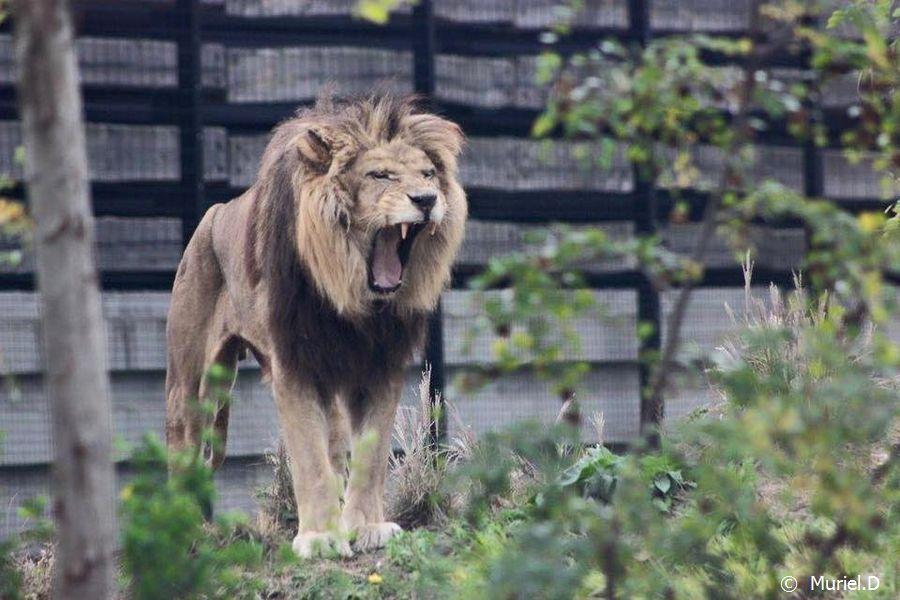 Néro Parc Zoologique de Paris