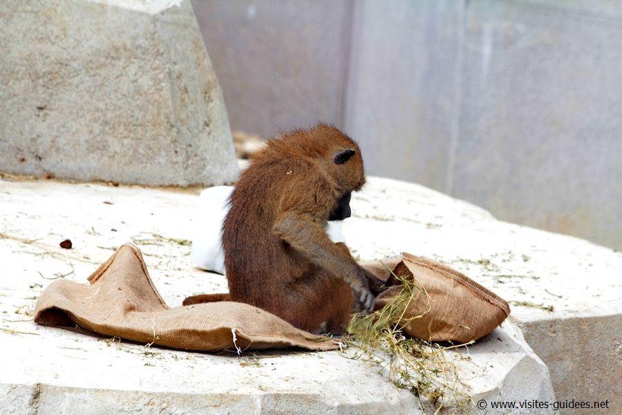 Noël au Parc Zoologique deParis