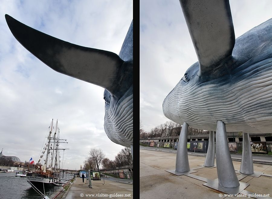 Une Baleine bleue à Paris