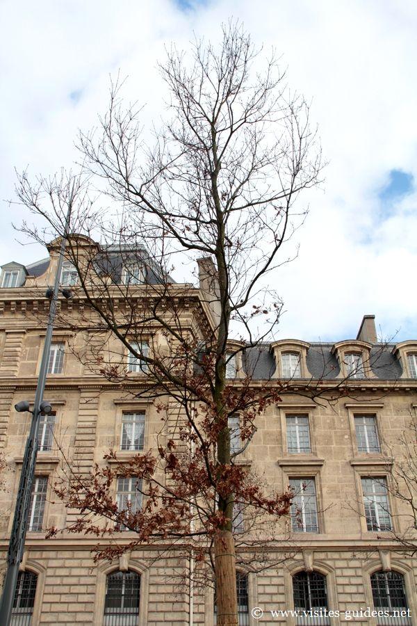Chêne du souvenir Place de la République