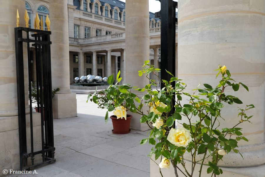 Rosiers du Domaine national de Saint Cloud au Palais Royal