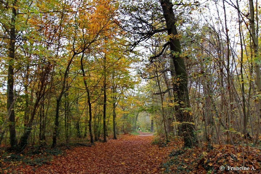 Bois de  Vincennes Paris