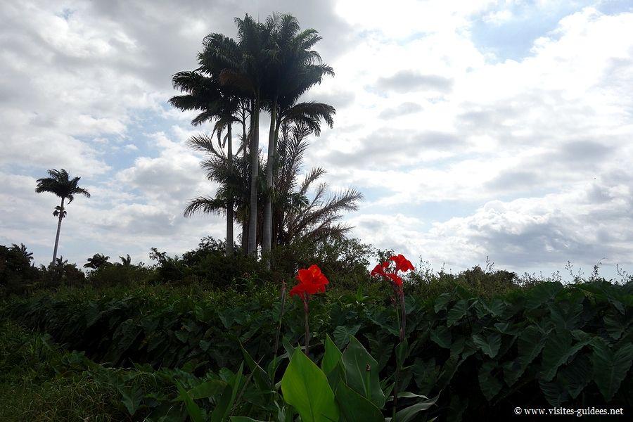 Tour des Roches Saint Paul Réunion