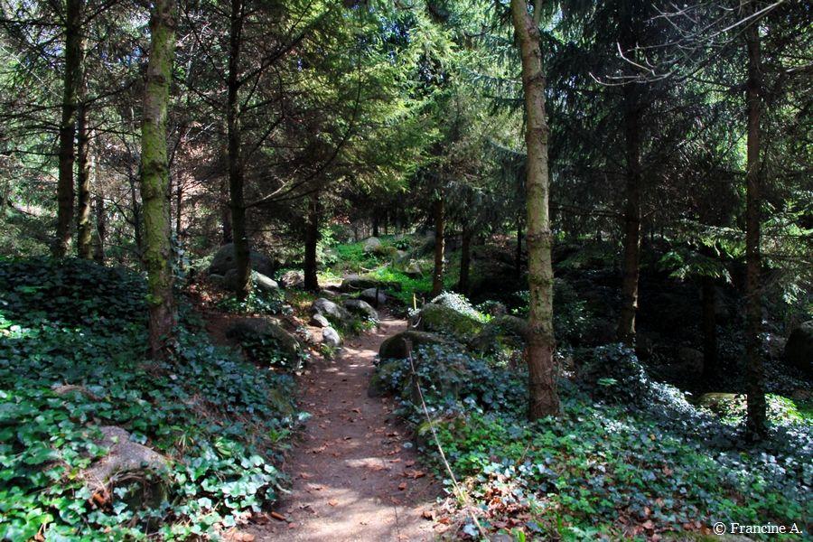 Jardin Albert Kahn La forêt vosgienne