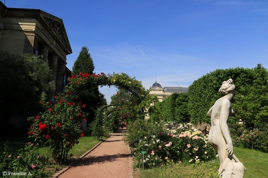 Venus genitrix Jardin des Plantes Paris