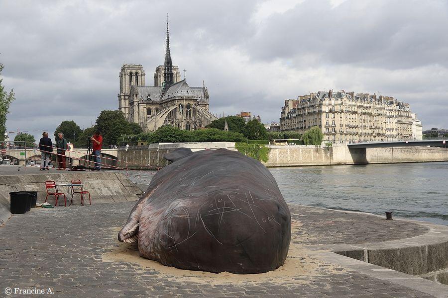 Un cachalot échoué à Paris