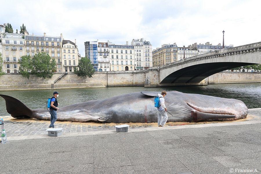 Un cachalot échoué en plein Paris